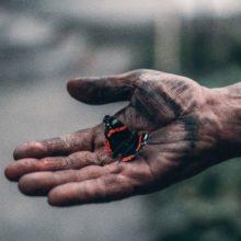 elijah-o-donnell-715864-unsplash sommerfugl i hånd