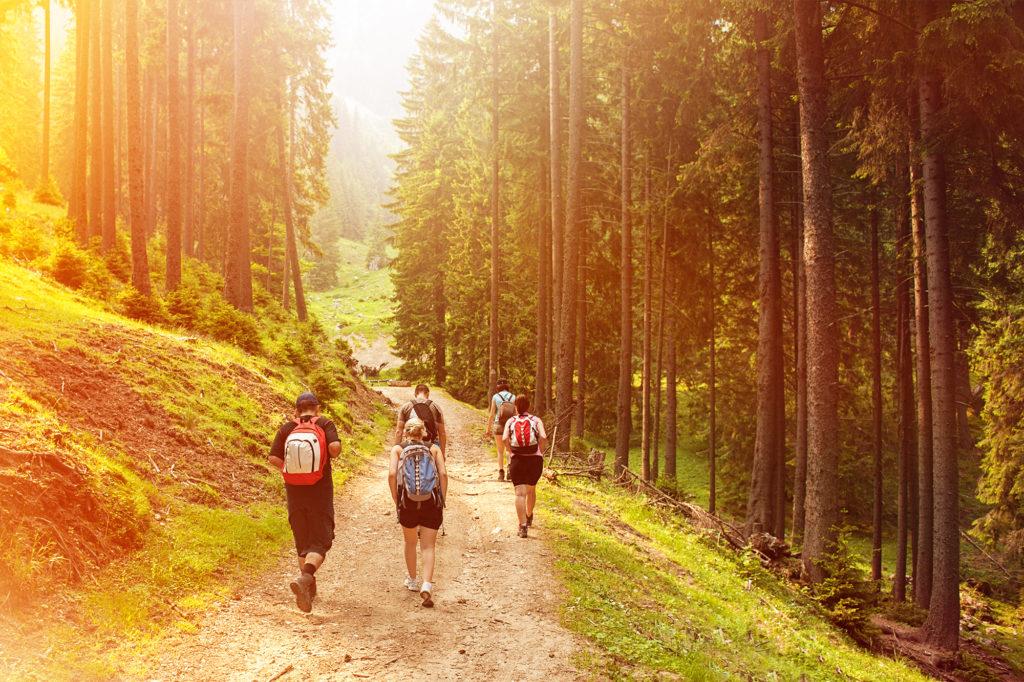 Ecura-skogstur